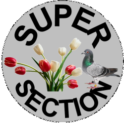Super Section