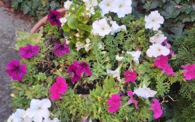 Virágos szeptember (2021/22)